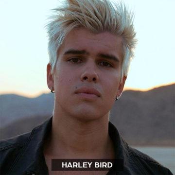 harley bird